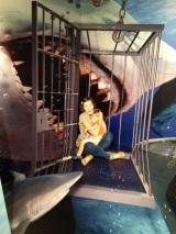 Aquapanda's 3d trick tripmuseum
